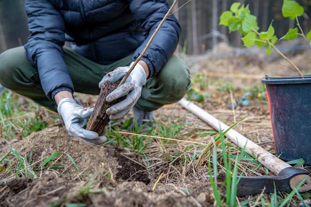 Восстановление умирающего леса с помощью посадки новых деревьев Premium Фотографии