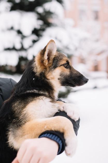 Собака сидит на руках человека Premium Фотографии