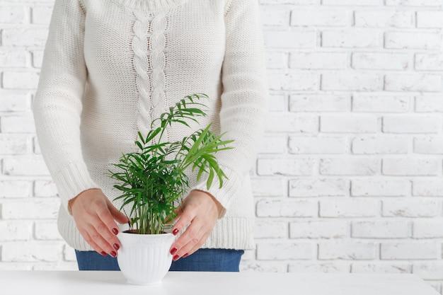 家の植物を保持している女性 Premium写真