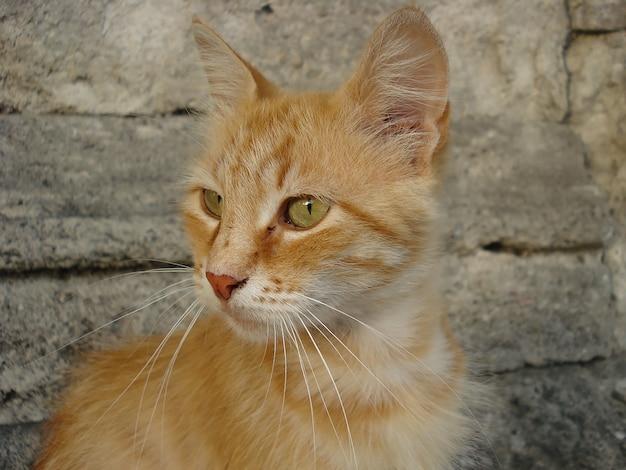 картинки желтого котика художник