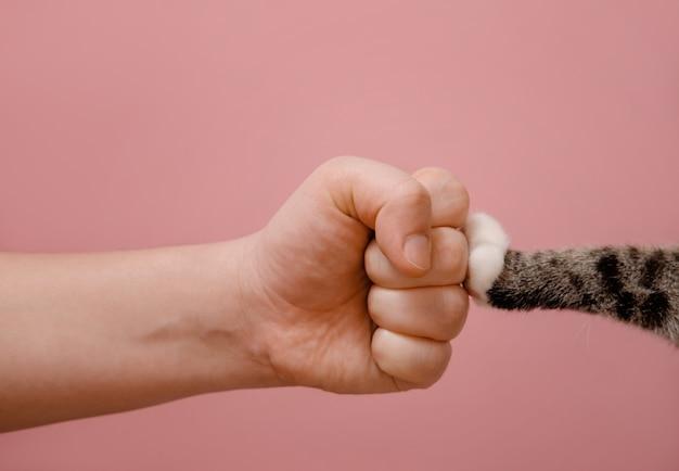 Кулачная рука и кошачья лапа противостояние животных и людей Premium Фотографии
