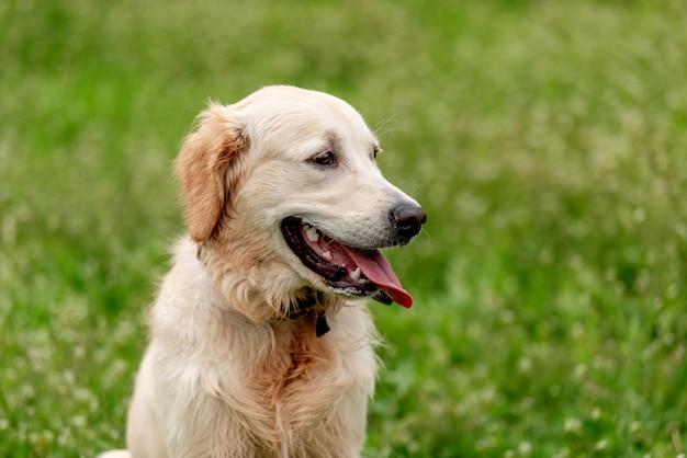 Милая собака, сидящая на цветущем поле Premium Фотографии