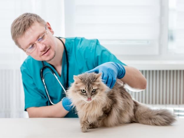 獣医事務所で猫の定期検査を行う獣医 Premium写真