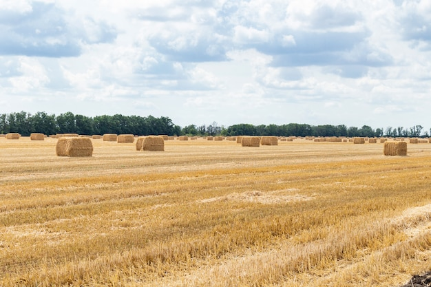曇りの青い空に干し草の山で収穫された穀物畑。農業農業農村経済農業概念 Premium写真