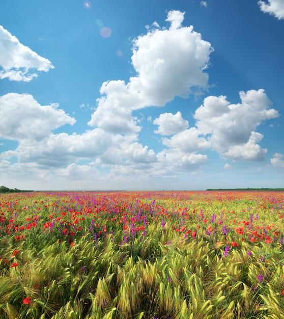 小麦とポピーの牧草地。 Premium写真