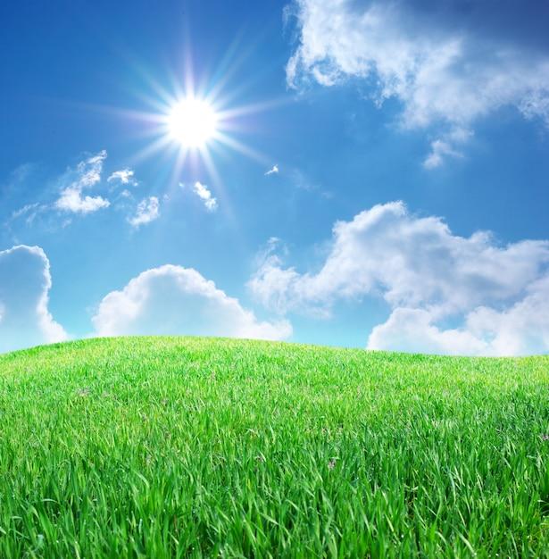 草と真っ青な空 Premium写真
