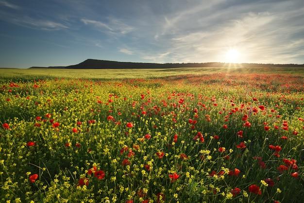 牧草地の春の花。 Premium写真