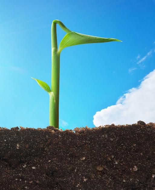空の小さな芽。概念的なシーン。 Premium写真