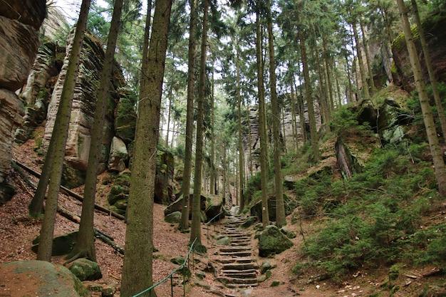 Каменная лестница в лесу Premium Фотографии