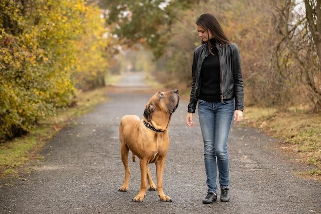 秋の公園で大きな犬フィラブラジレイロ品種と容女性 Premium写真