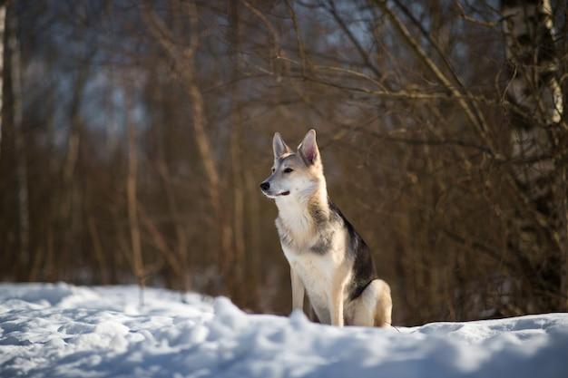 Симпатичные смешанные породы собак снаружи. дворняга в снегу Premium Фотографии