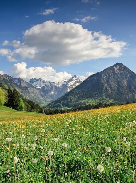 Цветочный луг и заснеженные горы. бавария, альпы, альгой, германия. Premium Фотографии