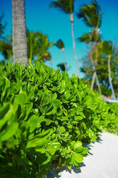 Вид красивый тропический зеленый красочный с кокосовыми пальмами с голубым небом Бесплатные Фотографии