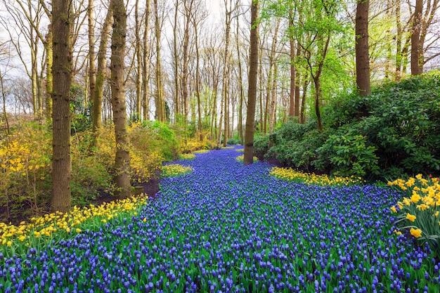 Пейзаж с красивыми цветущими цветами в знаменитом парке кёкенхоф Premium Фотографии