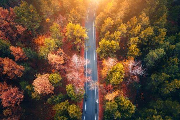 美しい秋の森の道の空撮 Premium写真