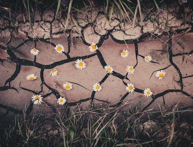 Фон с коричневой сухой трещины земли, цветы и зеленая трава Premium Фотографии