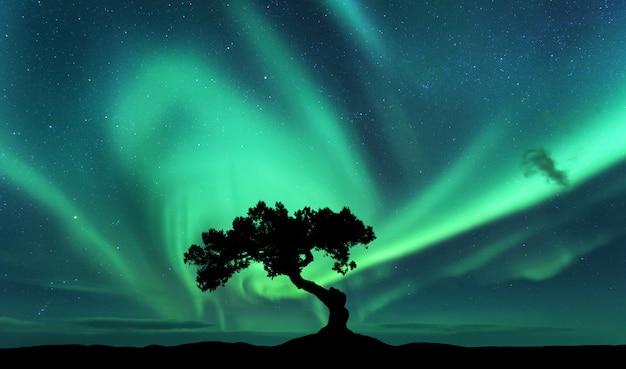オーロラと丘の上の木のシルエット Premium写真
