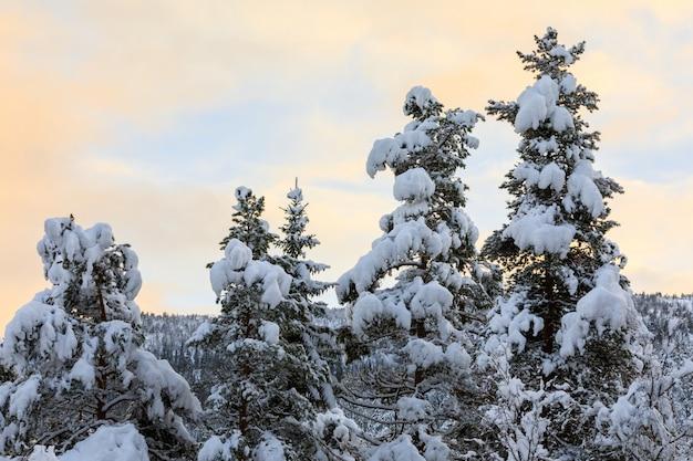 素敵なカラフルな空とモミの木で雪が降る Premium写真
