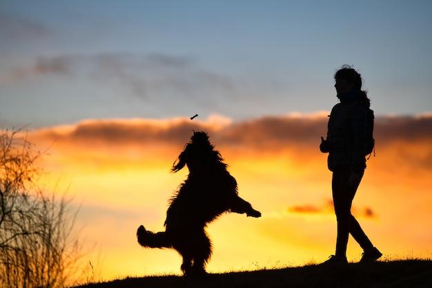 Большая собака прыгает, чтобы взять печенье от женщины силуэт с поверхностью на красочный закат Premium Фотографии