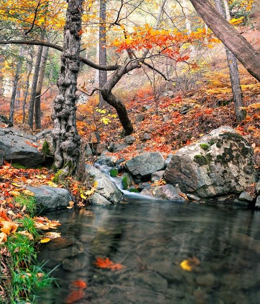 秋の森の滝と山川 Premium写真