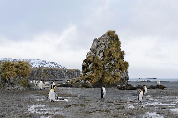 キングペンギンのいるサウスジョージア州の風景 Premium写真