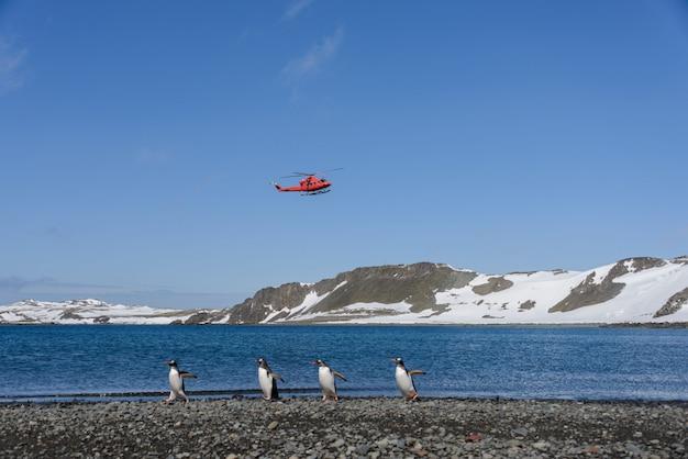 ビーチでのジェンツーペンギンのグループ Premium写真