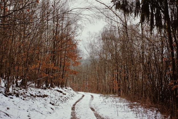 雪の中の車の跡とオレンジの葉のある木々のある冬の憂鬱なドイツの森。 Premium写真