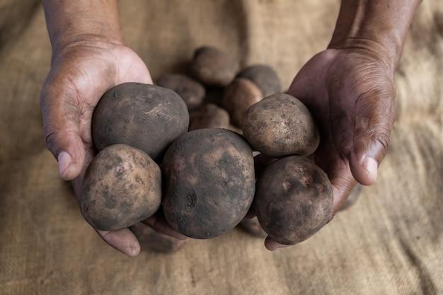 バックグラウンドで汚れたジャガイモとジュートマットの異なるサイズを示す黒人農家の手 Premium写真