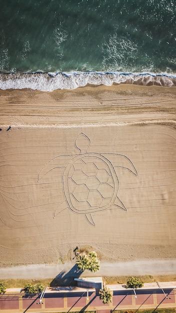 Пальмы и песчаный пляж с черепахой в песке в области малаги, андалусии испании. Premium Фотографии