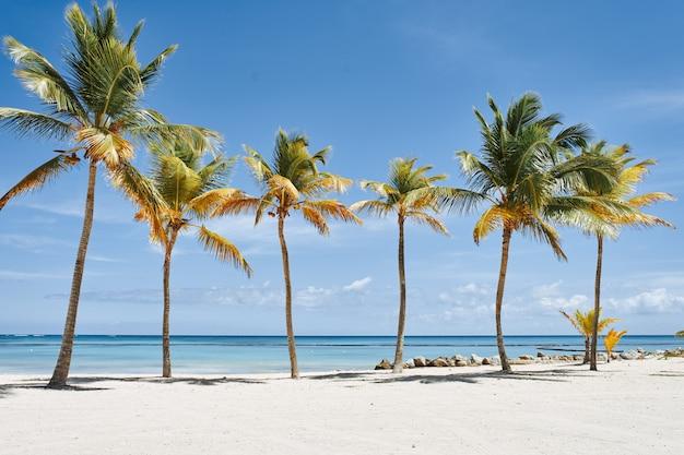 Пляж с пальмами и белым песком Premium Фотографии