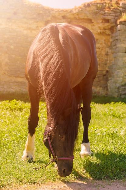 屋外の美しい黒い馬。乗馬のコンセプト。 Premium写真