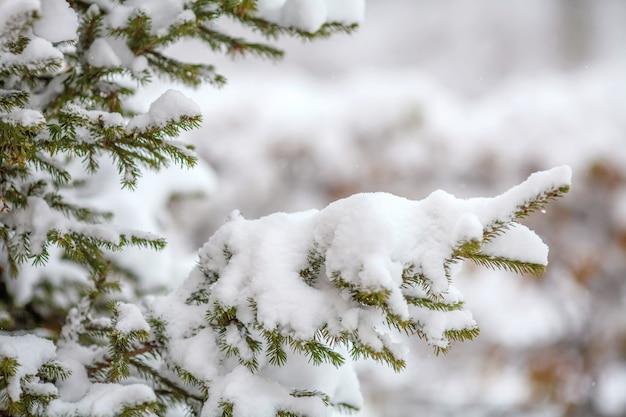 新鮮な雪、立ち下がり雪、冬の壁で覆われたモミの枝 Premium写真