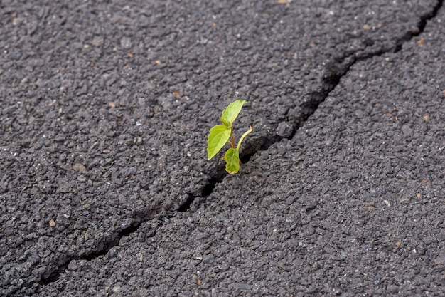 Зеленый росток, растение на сером трещины асфальта, лидер концепции Premium Фотографии