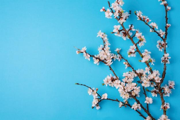 Вишневые ветви с цветами на ярко-синем фоне. Premium Фотографии
