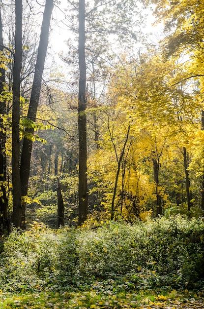 秋の森 Premium写真