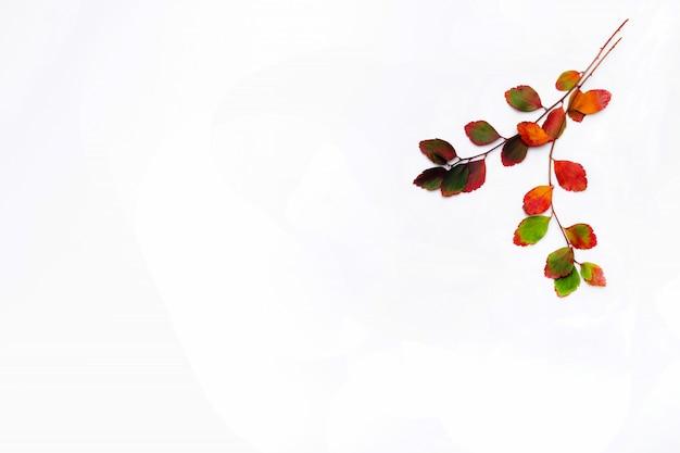 秋の枝は、白い背景で隔離を残します。平干し。季節限定のプロモーションや割引のためのコピースペース Premium写真
