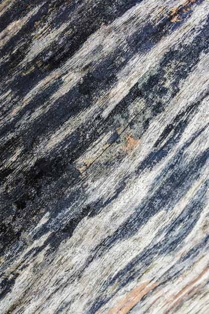 枯れ木の幹のクローズアップ Premium写真