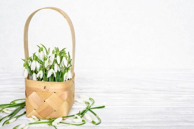 Весенние подснежники цветы в плетеной корзине на белом деревянном столе с копией пространства Premium Фотографии