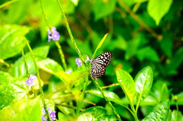 朝の花から蜜を飲む島の小枝の蝶が美しく見える Premium写真