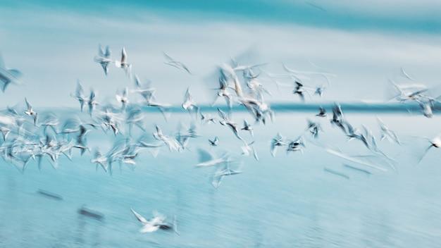空気中のグループ海鳥からの抽象的な写真 Premium写真