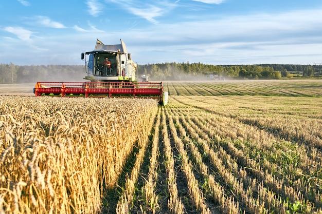 Зерноуборочный комбайн собирает спелую пшеницу. зрелые уши поля золота на предпосылке облачного оранжевого неба захода солнца. Premium Фотографии