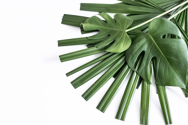 Фон, тропические разные листья на белом фоне Бесплатные Фотографии