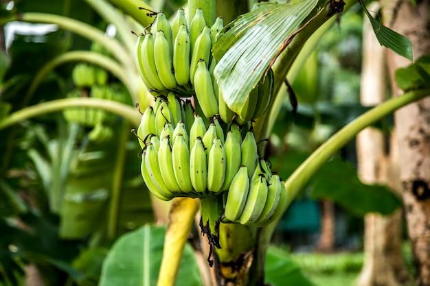 緑のバナナとヤシの木 無料写真