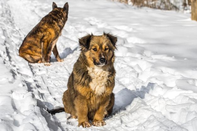 Собака в снежном лесу Premium Фотографии