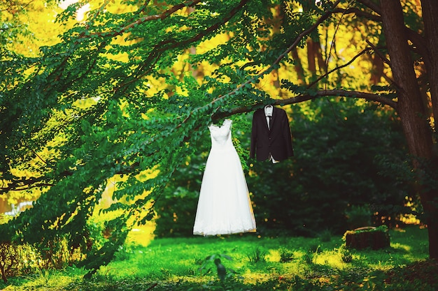 Свадебное платье костюм жениха и невесты на дереве в парке Premium Фотографии