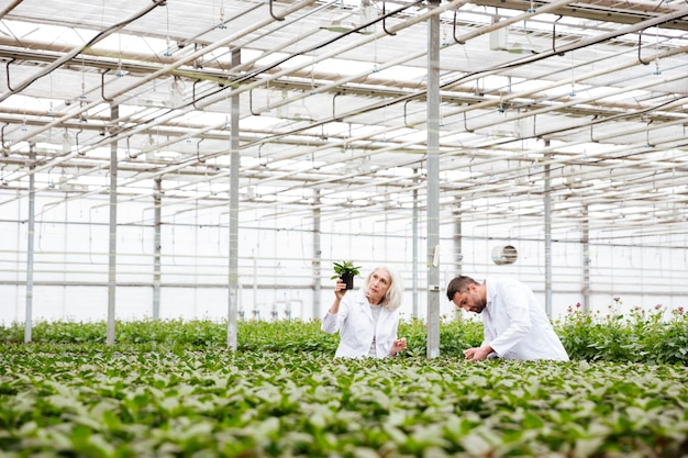 男と年配の女性が植物での作業 無料写真