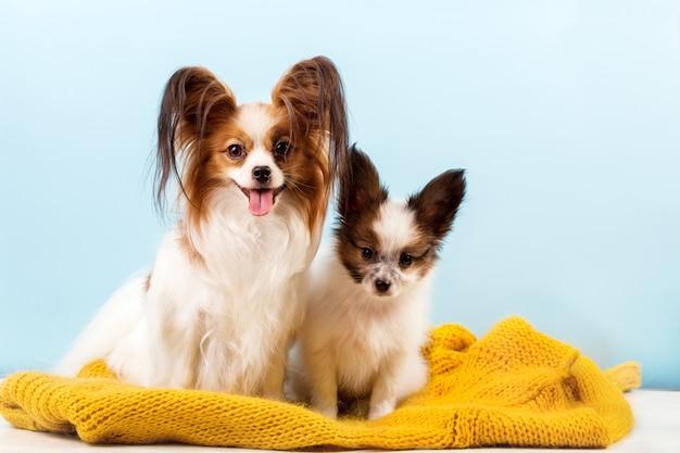 彼女の子犬とママ Premium写真