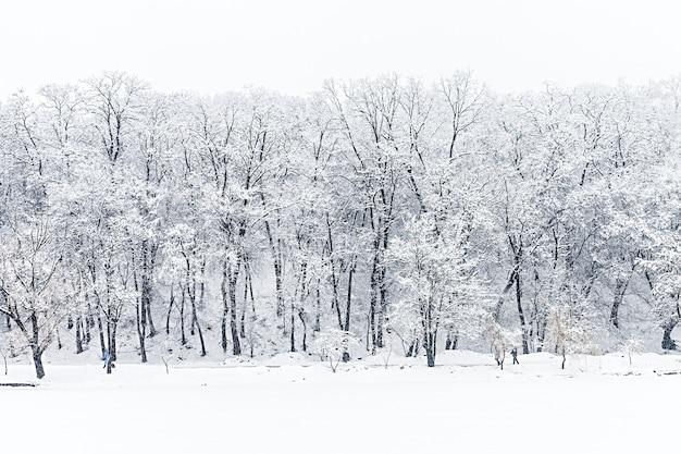 冬の森 Premium写真