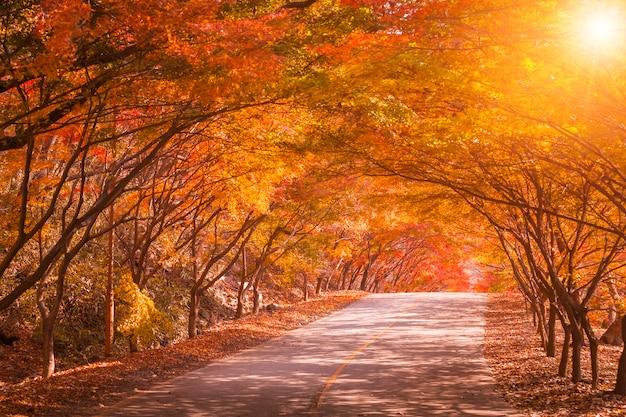 Осень в корее и клен в парке, национальный парк наджангсан в осенний сезон, южная корея Premium Фотографии