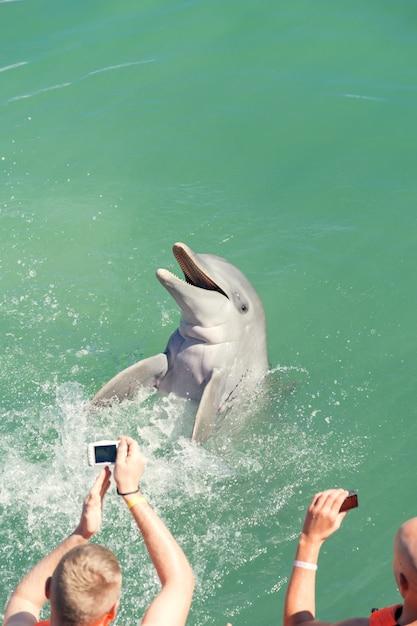 Люди плавают с дельфинами Premium Фотографии